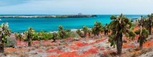 galapagos-islands_santa-cruz_boats_1